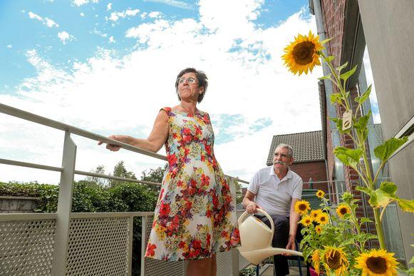 """Mama Sheila en papa Johan kregen kort na Isaura's overlijden een zakje met zonnebloemzaadjes. Van het vijftiental bloemen op hun terras priemt er eentje fier bovenuit. """"Je mag dat onnozel vinden, maar voor mij is dat Isaura die een teken geeft""""."""
