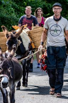 Ontstressen op de Holterberg met gebalk als achtergrondgeluid: 'Ezels zijn de perfecte wandelpartners'