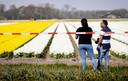 Een aantal lokale wegen in de Bollenstreek werden begin deze maand afgezet om te voorkomen dat het te druk wordt met mensen die naar de bloembollenvelden komen kijken.