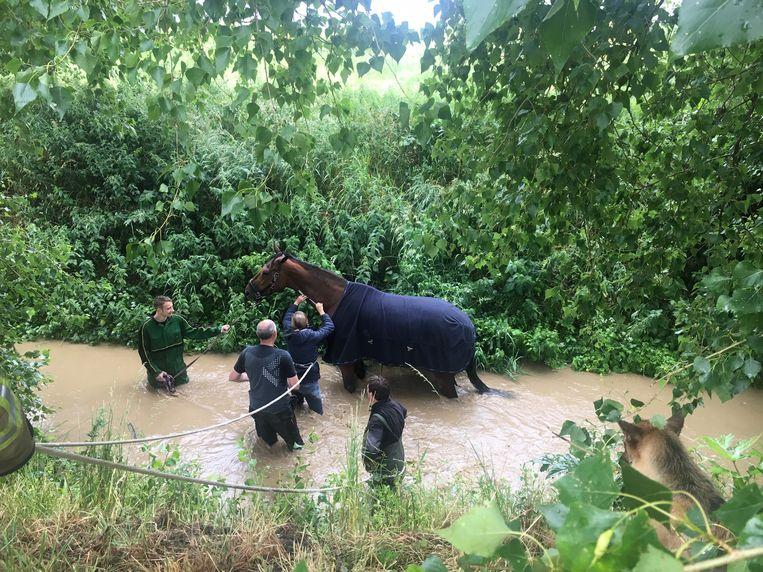 Het paard belandde in het water van de Poperingse Vaart.