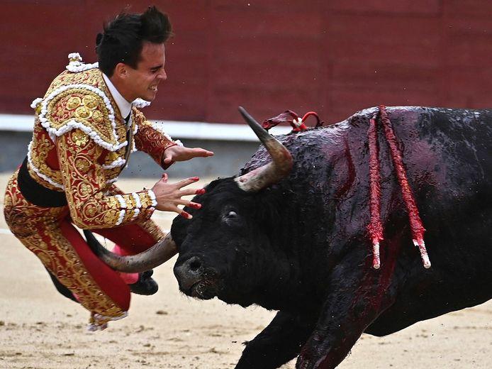 Het is al de tweede maal dat een stier Gonzalo Caballero zwaar te grazen neemt.