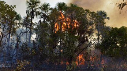 In 48 uur na kap- en brandverbod kwamen er in Brazilië bijna 4.000 nieuwe brandhaarden bij