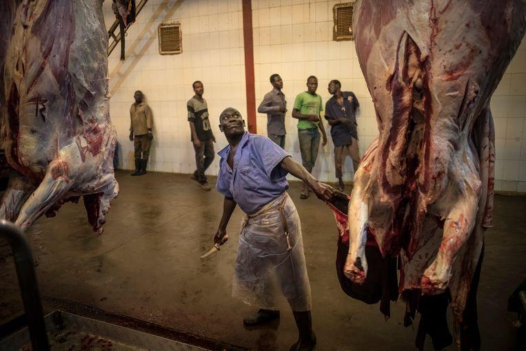 Veeteelt, vleesindustrie en export van vee naar buurlanden is voor Soedan een van de grootste bronnen van inkomsten. De veeteelt sector heeft veel potentie en zou een nog groter aandeel kunnen hebben in de economische ontwikkeling van Soedan.  Beeld Sven Torfinn