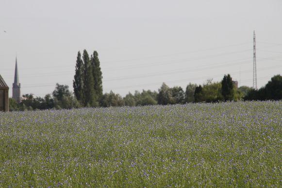 De bloeiende vlasvelden zorgen voor een lila kleurenpalet.