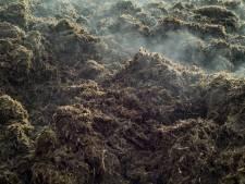 Vergunning uitbreiding mestbedrijf in Wâlterswâld vernietigd