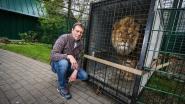Verwaarloosde leeuwen komen aan in Natuurhulpcentrum