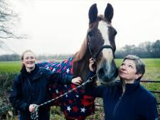 Paard Iwan (30) kon niet meer opstaan en werd door brandweer gered: 'Kijk eens hoe gênant ik er bij lig, help me'