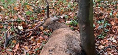 Hert overlijdt door aanrijding tussen Ede en Wekerom: 'Rijd voorzichtig'