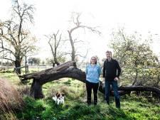 'Boerenbos' aanleggen vraagt veel geduld: 'Stapje voor stapje aan een ecosysteem bouwen'