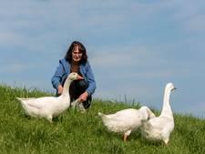 Jannie Klein beschermt de witte gans: Gendt betekent gans