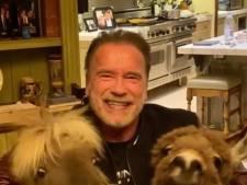 Les animaux d'Arnold Schwarzenegger lui volent la vedette sur Instagram