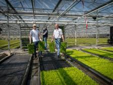 Huissense kweker: buxus wordt ten onrechte afgeschreven