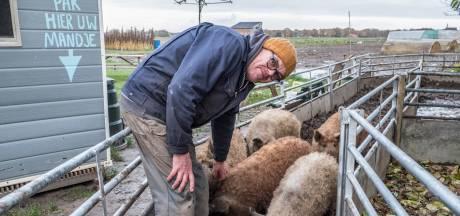 Buurt baalt van Hongaarse wolvarkens in Ottersum, bemiddelaar zoekt oplossing