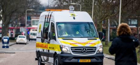 Dierenambulance Zeeuws-Vlaanderen heeft vrijwilligers nodig