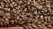 Gezocht: imker voor eerste gemeentelijke bijenkast