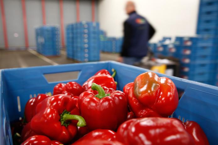 Nederland is een grote exporteur van groente.