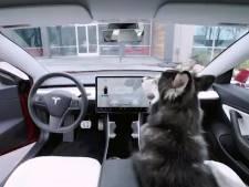 Geen gevaar meer voor oververhitte hond in de auto, dankzij nieuw systeem van Tesla