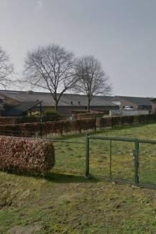 Varkenshouder in Moergestel wil verder met zonnepark en akkerbouw: 'Stal eraf, zon erop'