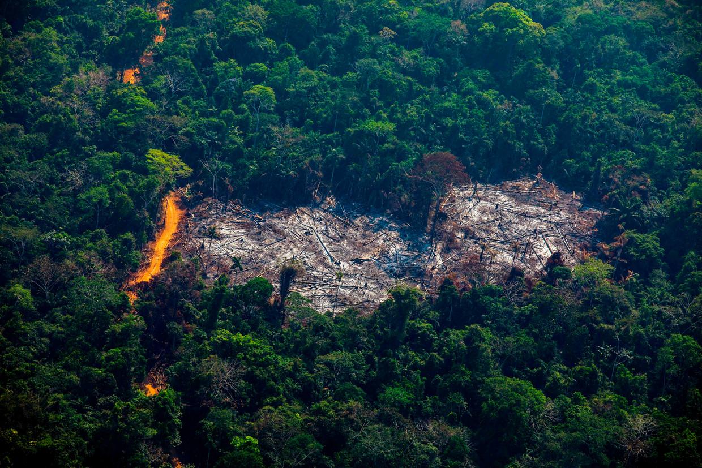 Ontbossing in Altamira, in de Braziliaanse staat Para.   Beeld AFP