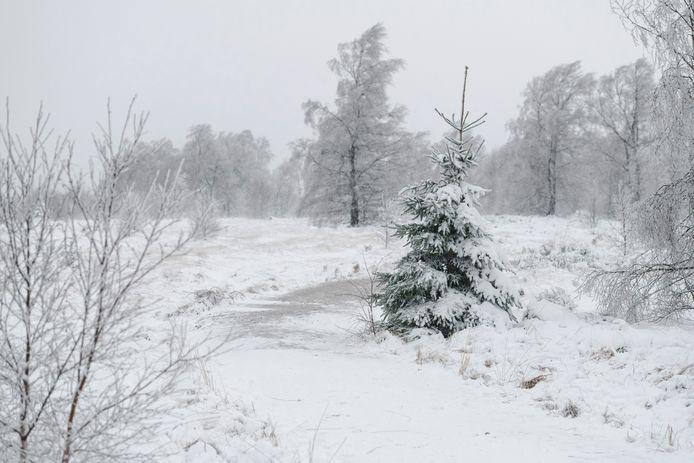 Ook de komende dagen verwacht het KMI sneeuw in de Hoge Venen.