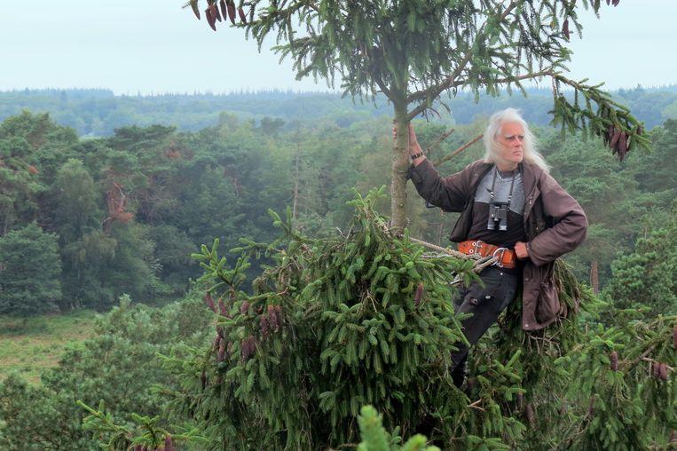 Roofvogelonderzoeker Rob Bijlsma in de top van een boom, waar hij bij voorkeur werkt.  Beeld Rob Buiter
