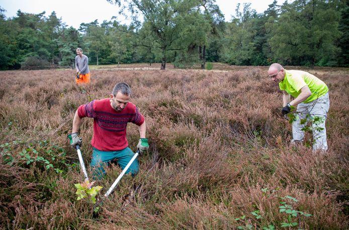 Mensen met een afstand tot de arbeidsmarkt worden door Natuurzorg Veluwe-Vallei ingezet voor werkzaamheden in de natuur, hier word het heitje in het Bennekoms Bos ontdaan van jonge boompjes.