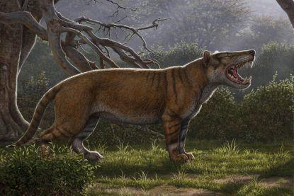 Wetenschappers ontdekken een van de grootste vleesetende zoogdieren ooit
