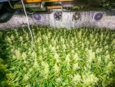 Hennepkwekerij aangetroffen op zolder tijdens actiedag in Eindhoven