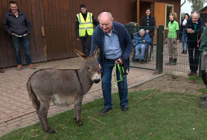 De nieuwe mini-ezel van kinderboerderij Horsterpark om de 80ste verjaardag van vrijwilliger Joop Harmsen (foto) te vieren.