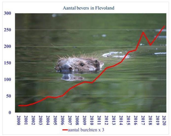 Aantal bevers in Flevoland