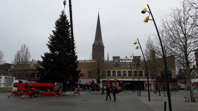 Om de boom in een put op de markt te kunnen plaatsen moet eerst de enorme stam nog smaller worden gemaakt met kettingzagen. Daarna kan hij op zijn plek worden getakeld.