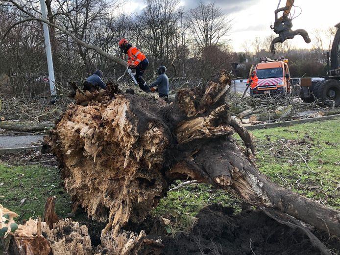 Medewerkers van de stad Brugge ruimen omgewaaide bomen op.