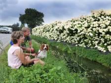 Genieten van de 'bloemenmuur' van Zoelen