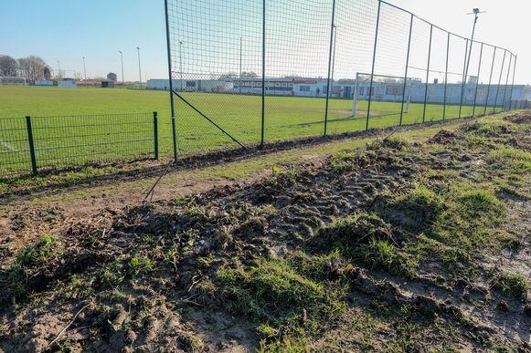 Enkele tientallen populieren werden deze week gekapt achter de doelen van SK Nossegem.