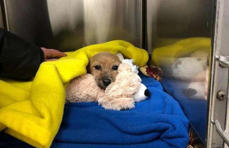 Het hondje werd verzorgd in de dierenkliniek.