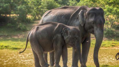 Meer bescherming in het verschiet voor Aziatische olifanten, jaguars en sommige haaien