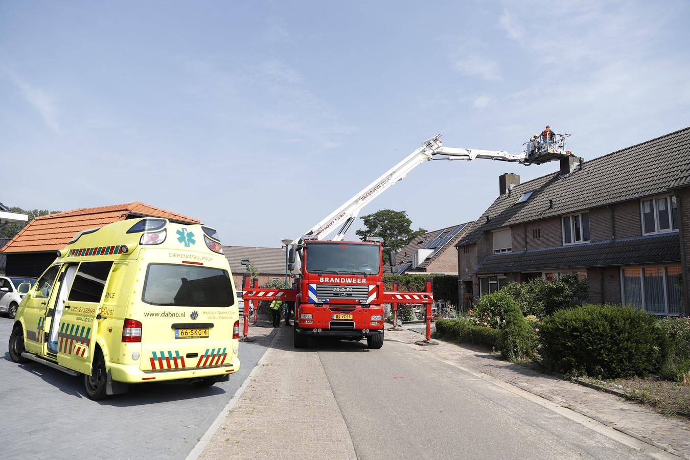 Medewerkers van brandweer en dierenambulance zijn druk met meerdere huisdieren in en buiten een woning aan de Korte Sint Janslaan in Sambeek.