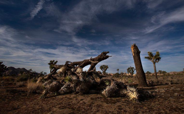 Afbeeldingsresultaat voor vernielingen in Joshua Tree National Park