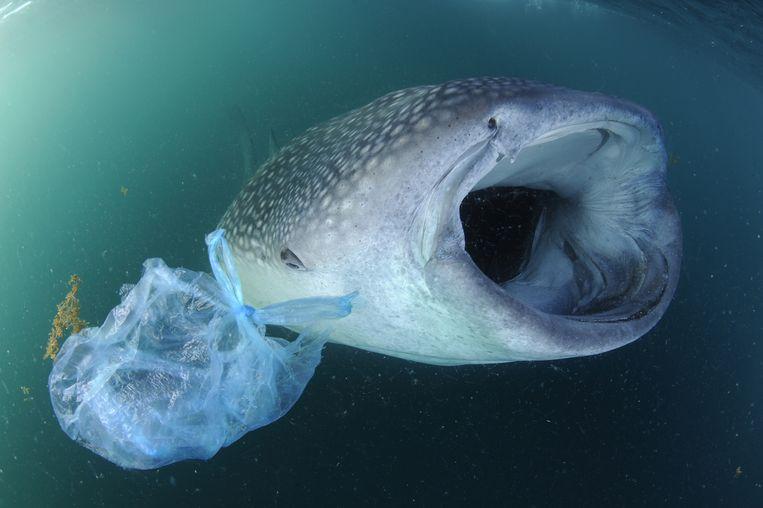 Straks meer plastic dan vis in zeeën
