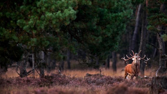 Recreatie en natuur moeten hand in hand gaan op de Veluwe. De provincie Gelderland steekt dit jaar al anderhalf miljoen euro extra in het nationale park.