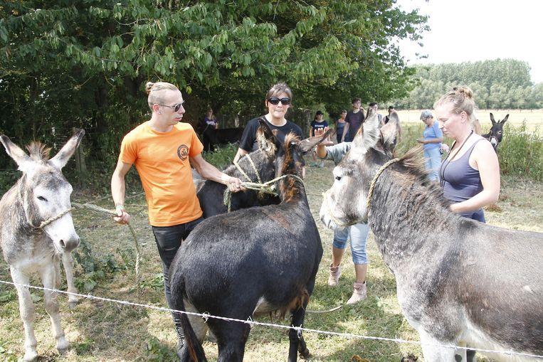 De ezels werden in beslag genomen.