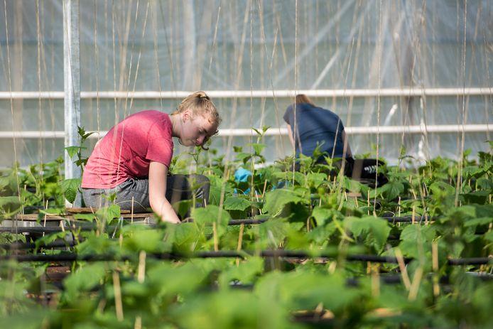 Oirschot Organics krijgt een lawine over zich heen van personeel dat zich aanbiedt.