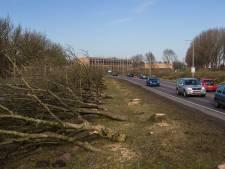 Essentaksterfte woekert voort in Kampen: weer 200 bomen plat