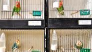 Vogeltentoonstelling in Oktoberhallen