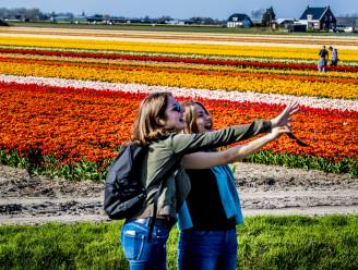 Bollenvelden: dé plaats voor een 'tulpie'