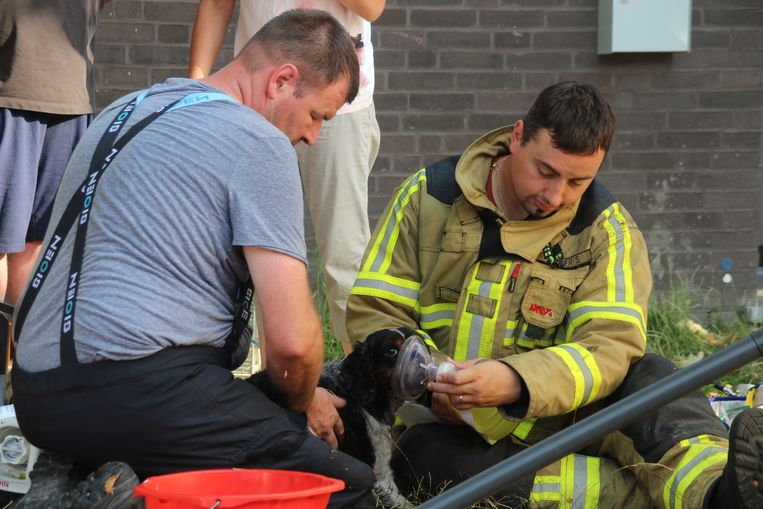Brandweer redt hondje uit woning waar keukenbrand ontstaat