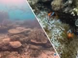 Great Barrier Reef in dertig jaar gehalveerd