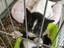 3 afgedankte kittens uit Poortvliet gered