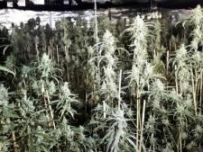 Politie vindt wietkwekerij met honderden planten in bedrijfspand Terneuzen