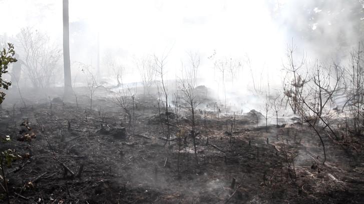 Naaldbomenbos in Vlierden hard geraakt door bosbrand
